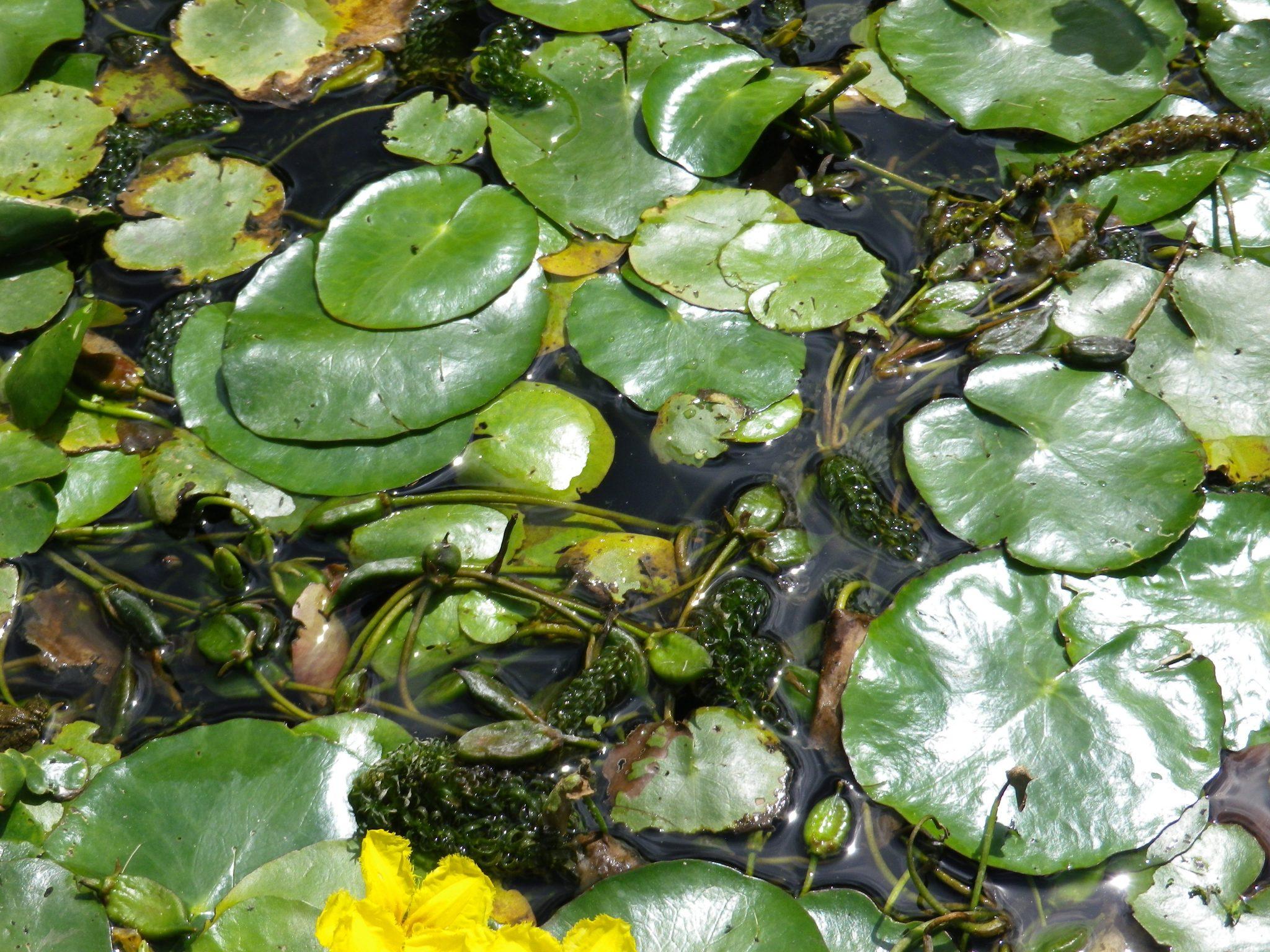 Comment Faire Un Petit Bassin Aquatique comment bien hiverner les différentes plantes aquatiques